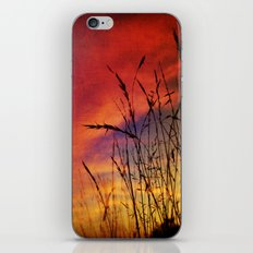 Dreaming in Color (of the Setting Sun) iPhone & iPod Skin
