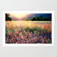 Fields Of Gold Art Print