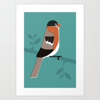 Raitán (Asturian Robin) Art Print
