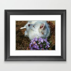 Sylvie Naps With the Crocuses  Framed Art Print