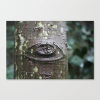Eye of the Tree Canvas Print