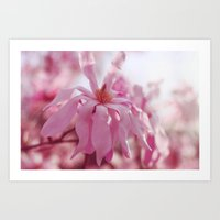 Pink Star Magnolia Art Print
