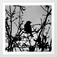 Silhouette Bird.  Art Print