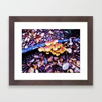 Fungi nature. Framed Art Print