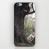 Oak tree iPhone & iPod Skin