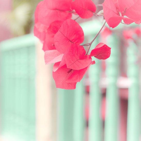 Pink Leafs on Blue Fence  Art Print