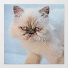 Himalayan Cat Canvas Print