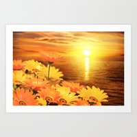 African Daisies on Backdrop of Sea of Cortez at Sunset Art Print