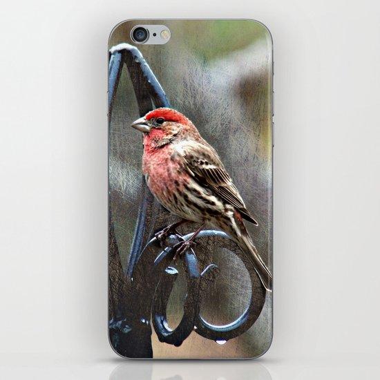 Male House Finch iPhone & iPod Skin