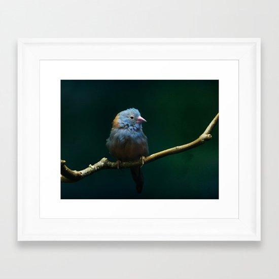 Cordon Bleu Canary Framed Art Print