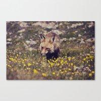 Summer Fox Canvas Print