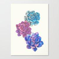 Vibrant Succulents  Canvas Print
