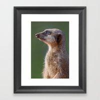 Meerkat Centurion Framed Art Print