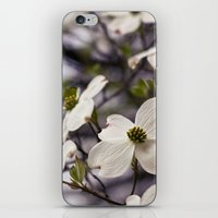 The Wee Dogwood Blooms No Less Beauty iPhone & iPod Skin