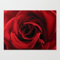 Rose #2 Canvas Print