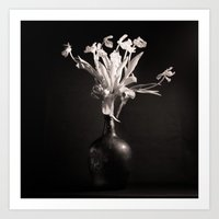 Old White Tulips Art Print