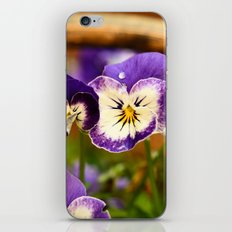 Viola - color iPhone & iPod Skin