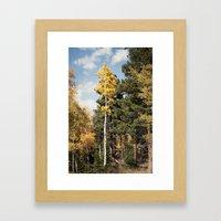 Skinny Aspen Framed Art Print