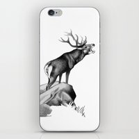 Stag Roaring In The Rut iPhone & iPod Skin