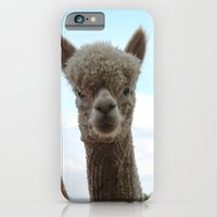 iPhone & iPod Case featuring Alpaca by SC Photography