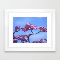 Jason's Dogwood Pink Framed Art Print