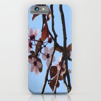 iPhone & iPod Case featuring Cherry Blossom  by Kookyphotography