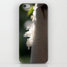 Birtch Light iPhone & iPod Skin