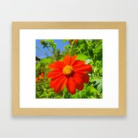 Tithonia with Bee, Floral Framed Art Print