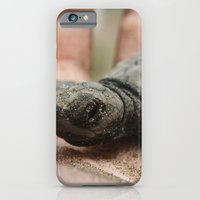 iPhone & iPod Case featuring baby olive ridley sea turtle by Katie Pelon