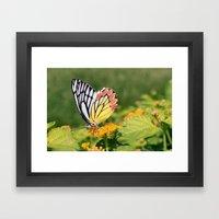 Butterfly (2) Framed Art Print