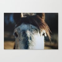 neighsayers Canvas Print