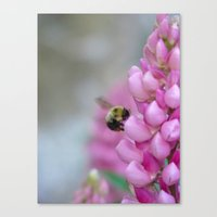 Buzzin' Round the Pink Canvas Print
