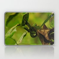 Green Snake in the Trees Laptop & iPad Skin