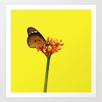 African Monarch Art Print