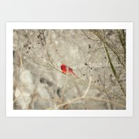 A bird on a winter's day Art Print