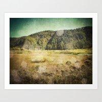 Big Basin Redwoods Art Print