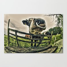 Holy cow its a bull Canvas Print