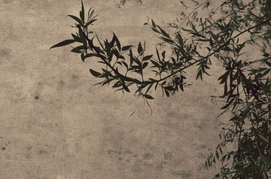 Oriental Breeze Art Print