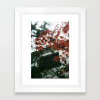 Red Maple Framed Art Print