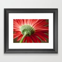 Back of Red Gerbera Daisy Framed Art Print