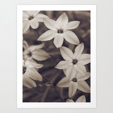 Coffee Stained Flowers Art Print