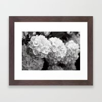 Snow Balls Framed Art Print