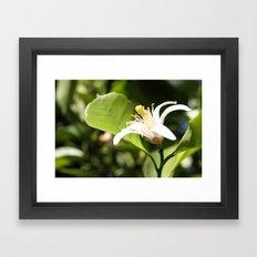 Lemon flower Framed Art Print