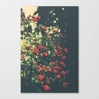Summer Roses Series  - I… Canvas Print