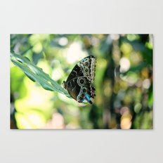 With a Broken Wing... Canvas Print