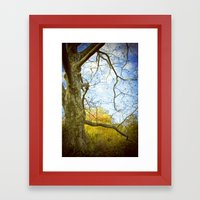 Oak Run Framed Art Print
