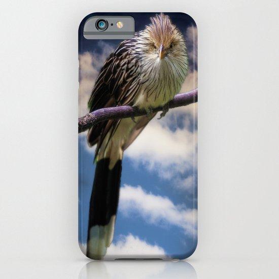 Brazilian Guira Cuckoo iPhone & iPod Case