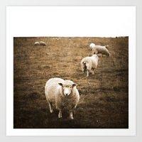 Sheep in a field Art Print