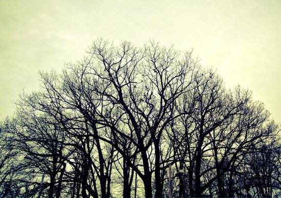 Follow the Trees Art Print