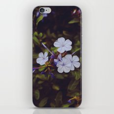 Violet Delights iPhone & iPod Skin